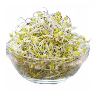 Brokolice - semínka na klíčení 500 G