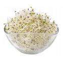 Lucerna - semínka ke klíčení 500 g (Vojtěška / Alfalfa)